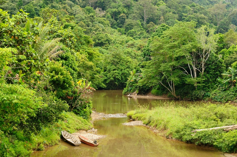 Sinergi Bank HSBC bersama WWF Indonesia dalam Konservasi Lingkungan