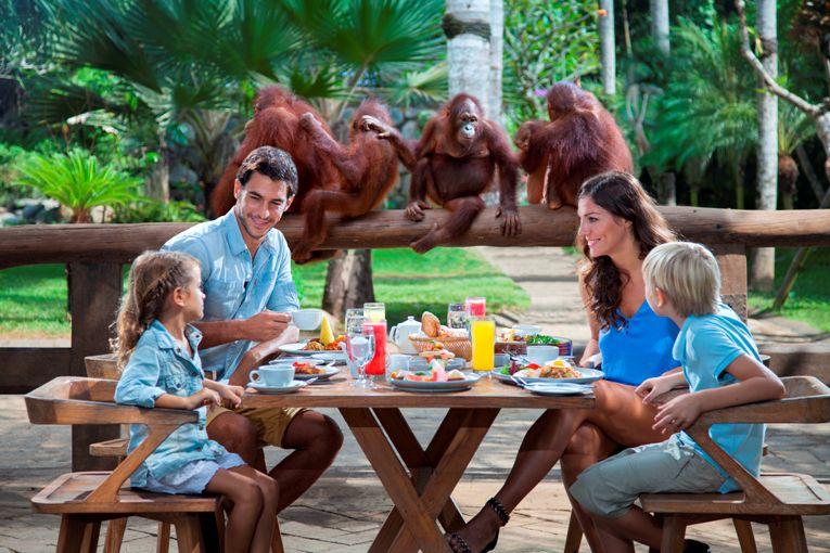 Pengalaman Sarapan Bersama Orangutan dan Gajah di Bali Zoo