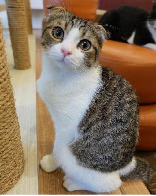 Mari Berkunjung ke Cutie Cats Café Kemang