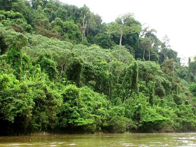 Mari Selamatkan Kalimantan Bersama WWF Indonesia dan WWF Malaysia