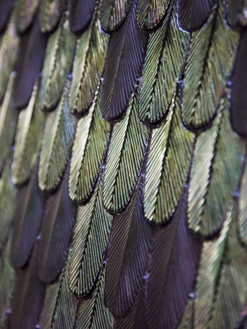 Koleksi Ubin Lansiran Botteganove dengan Corak Sayap Burung