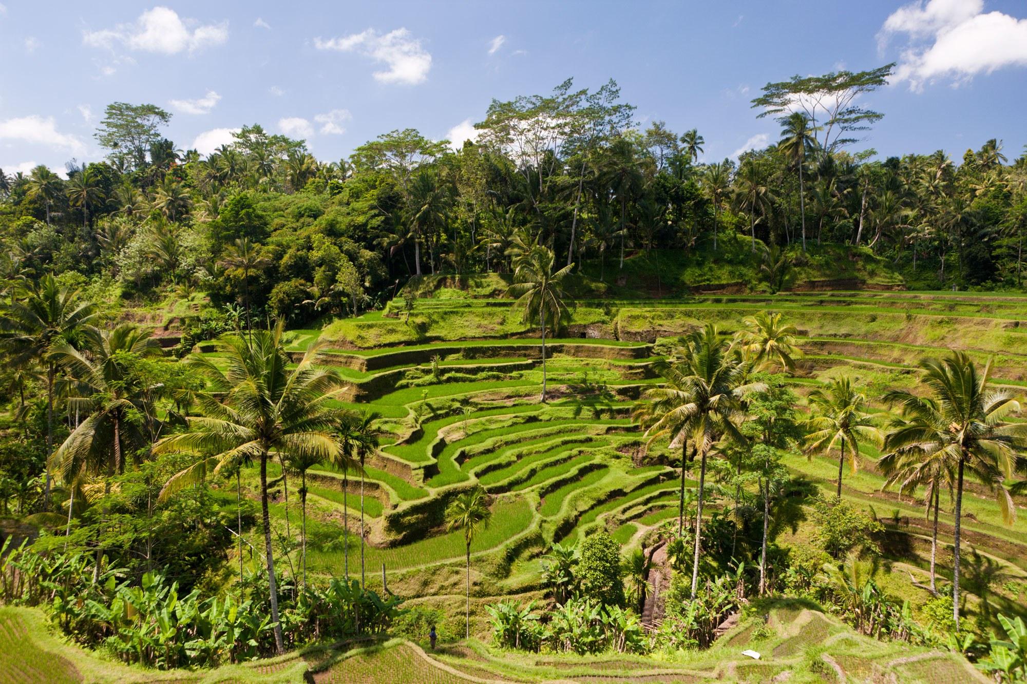 Ubud Bali Termasuk 15 Kota Terbaik di Dunia
